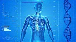 Representación de un cuerpo humano y el ADN