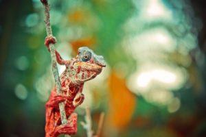 camaleón colgado de una rama