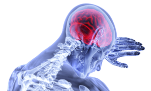 ilustración del cerebro de una persona vista por dentro